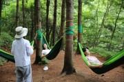코로나19 대응인력 위한 숲치유 프로그램 '시범운영'