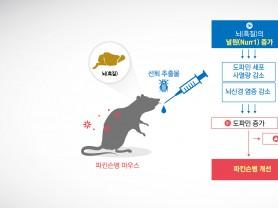 매미허물(선퇴), 항파킨슨병 효능 입증