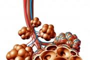 코로나19 특징인 폐 점액에 대한 중의약 치료는?
