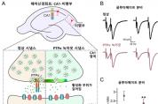 뇌신경세포 신호전달 규명으로 뇌질환 치료 '실마리'