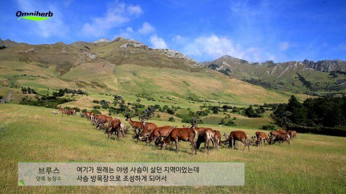 옴니허브, '청정 뉴질랜드 녹용' 홍보 동영상 한의원 무료 제공